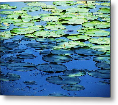 Lily Pads -one Metal Print by Todd Sherlock