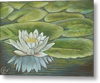 Lily Pads Metal Print by Stephanie L Carr