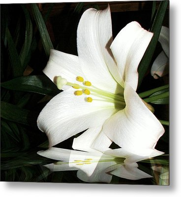 Lily Reflection Metal Print by Pamela Hyde Wilson