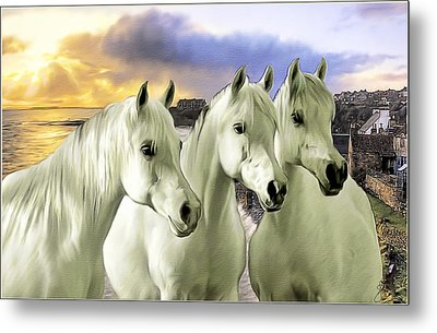 Lipizzans Metal Print by Tom Schmidt