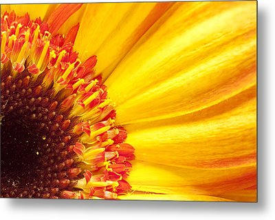 Metal Print featuring the photograph Little Bit Of Sunshine by Eunice Gibb