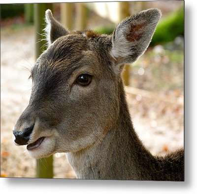 Little Deer Metal Print by Karen Grist