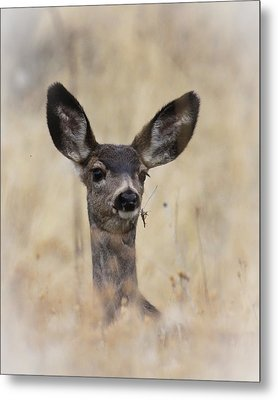 Metal Print featuring the photograph Little Fawn by Steve McKinzie
