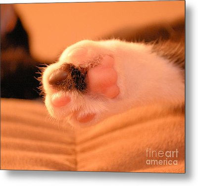 Metal Print featuring the photograph Little Foot by Melissa Goodrich
