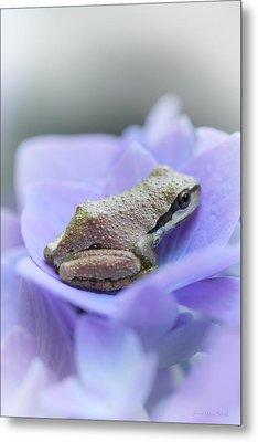 Little Frog On Hydrangea Flower Metal Print by Jennie Marie Schell