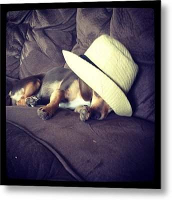 Little Guy Was So Tired He Fell Asleep Metal Print by Stephanie Brown