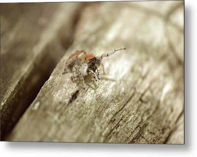 Metal Print featuring the photograph Little Jumper In Sepia by JD Grimes