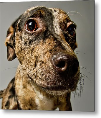Little Pup Metal Print by Square Dog Photography