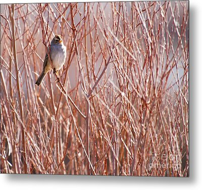 Little Sparrow Metal Print by Sabrina L Ryan