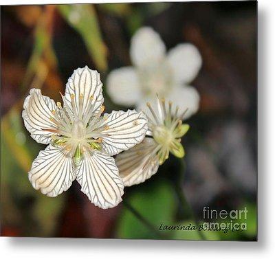 Little Wildflower Metal Print by Laurinda Bowling