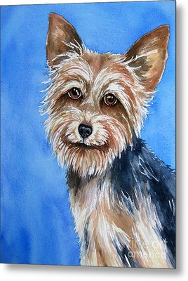 Little Yorkie Metal Print by Cherilynn Wood