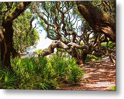 Live Oaks Metal Print by Tanya Chesnell