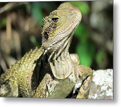Lizard Metal Print by Joyce Woodhouse