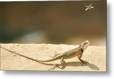 Lizards Metal Print by Shahzeb Nasir