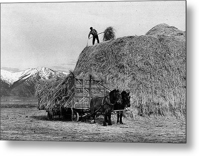 Loading Hay Metal Print by Arthur Rothstein