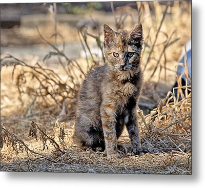 Metal Print featuring the photograph Lone Feral Kitten by Chriss Pagani