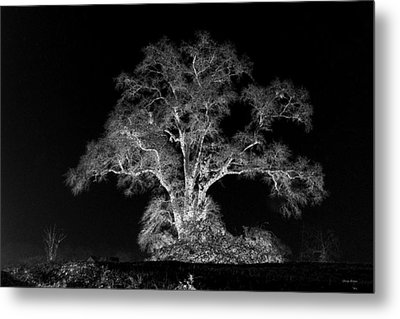 Metal Print featuring the photograph Lone Tree 002 by George Bostian