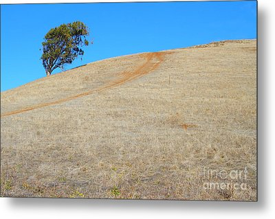 Lone Tree At Coyote Hills California . 7d10906 Metal Print by Wingsdomain Art and Photography