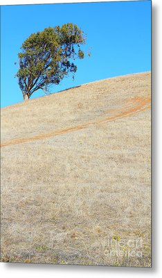 Lone Tree At Coyote Hills California . 7d10908 Metal Print by Wingsdomain Art and Photography