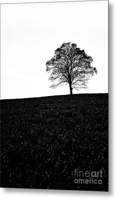 Lone Tree Black And White Silhouette Metal Print