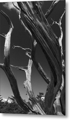 Metal Print featuring the photograph Lone Tree by David Gleeson