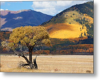 Metal Print featuring the photograph Lone Tree by Jim Garrison