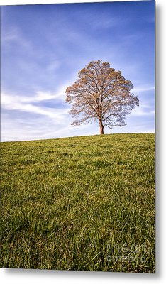 Lone Tree On The Hill Colour Metal Print