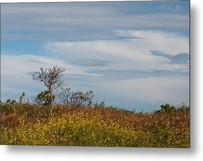 Metal Print featuring the photograph Lone Tree On The Rhode Island Coast by Nancy De Flon