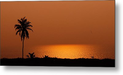 Lone Tree Silhouette During Sunset Metal Print by Hegde Photos