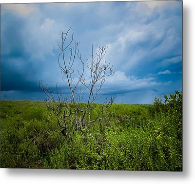 Lone Tree Metal Print by VJ Musick