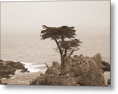 Loneliest Tree In The World Metal Print by GuitarGeeks Photography