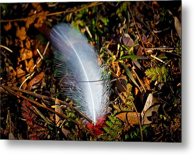 Lonely Feather Metal Print by Doug Long