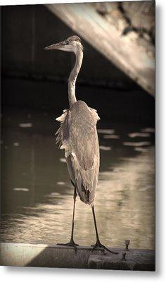Lonely Flamingo Bird Metal Print by Radoslav Nedelchev