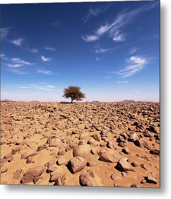 Lonely Tree At Sahara Desert Metal Print by Taghit