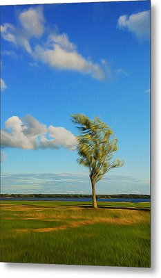 Lonely Tree. Metal Print by Celso Bressan