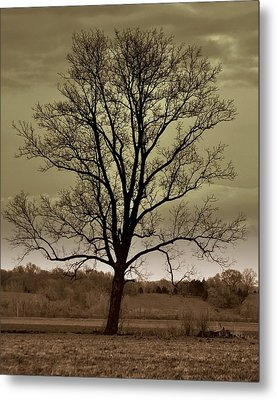 Lonely Tree Metal Print by Marty Koch