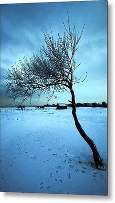 Lonely Winter Tree Metal Print by Svetlana Sewell
