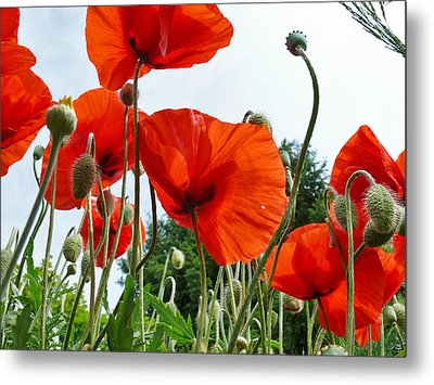 Lonely Withering Poppies Metal Print