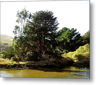 Lonelytree  Metal Print by The Kepharts