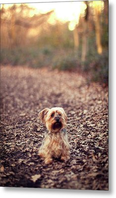 Long Hair Puppy Metal Print by Someone bought my images.
