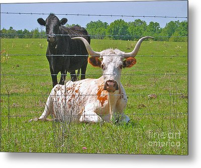 Metal Print featuring the photograph Longhorn Resting by Val Miller