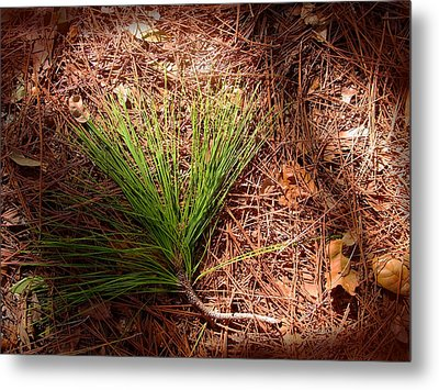 Longleaf Pine Needles Metal Print by John Myers
