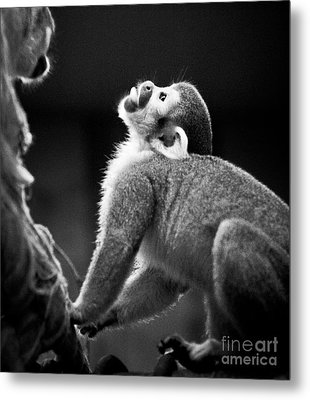 Look Up Metal Print by Darcy Michaelchuk