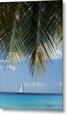 Looking Through Palm Trees To Large Metal Print by Axiom Photographic