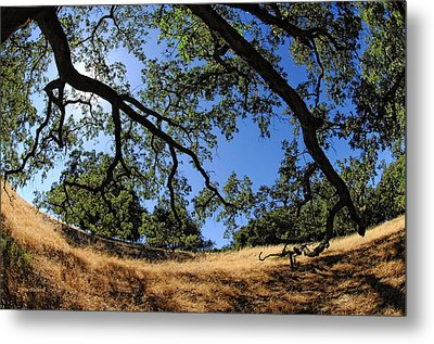 Looking Through The Oaks Metal Print by Donna Blackhall