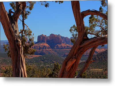 Looking Through The Trees Metal Print