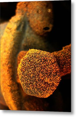 Lost  Metal Print by Shirley Sirois