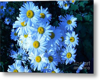 Lot Of Daisies Metal Print by AmaS Art