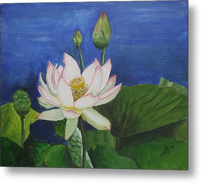 Lotus Flower Metal Print by Kim Selig