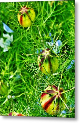 Metal Print featuring the photograph Love In A Mist by Steve Taylor